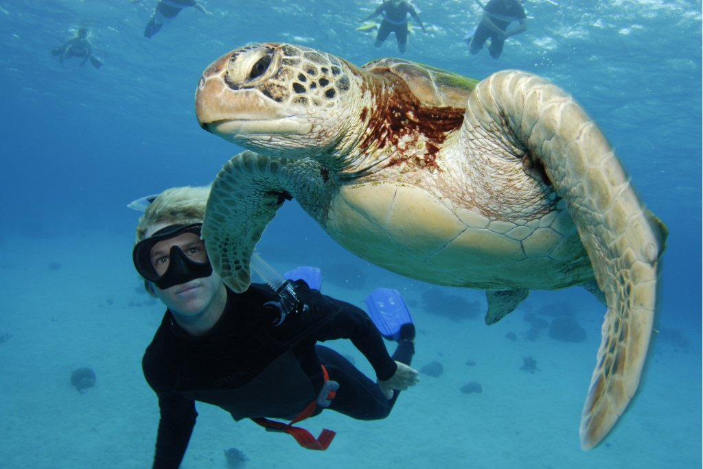 diver swimming with a turtle in the Great Barrier Reef